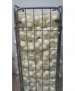 Cebolla Entera Pelada 2kg