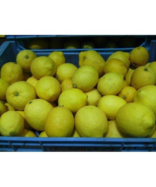 Limón 5kg