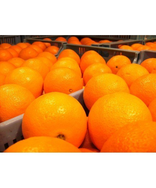 Naranja Mesa 1kg
