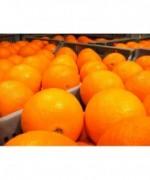 Naranja Mesa 5kg