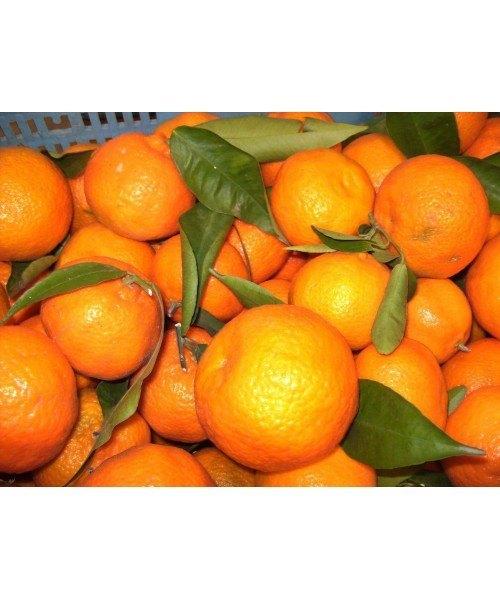 Naranja Clementina 1kg